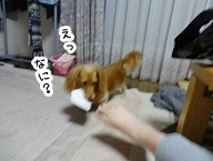 kinako1081.jpg