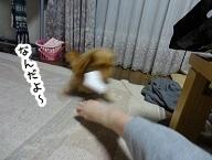 kinako1084.jpg