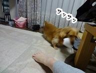 kinako1085.jpg