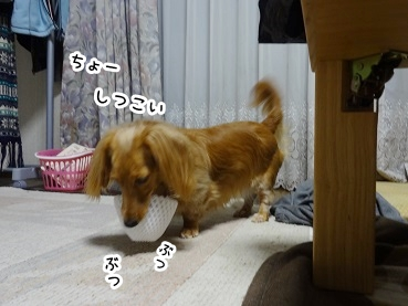 kinako1086.jpg