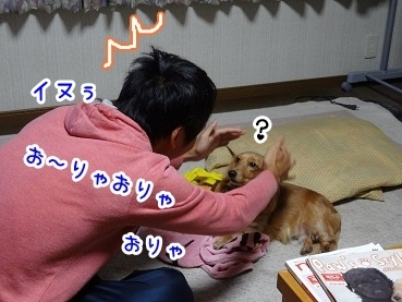 kinako1092.jpg