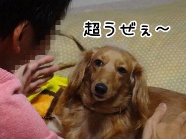 kinako1094.jpg
