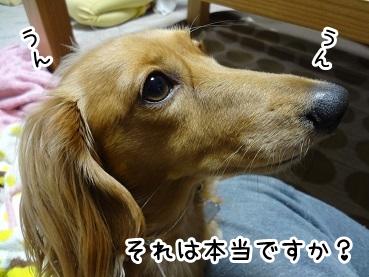 kinako1103.jpg