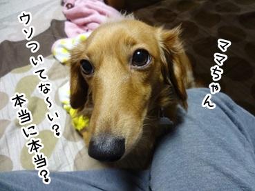 kinako1104.jpg