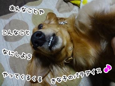 kinako1105.jpg