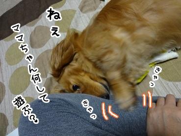 kinako1106.jpg