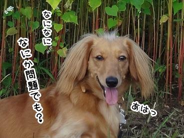kinako1109.jpg