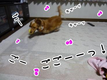 kinako1113.jpg