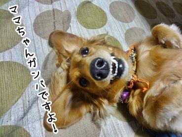 kinako1120.jpg