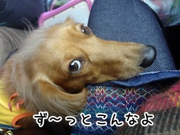 kinako1135.jpg