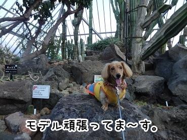 kinako1138.jpg