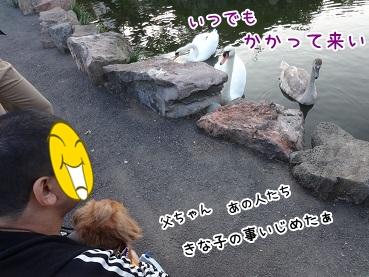 kinako1142.jpg