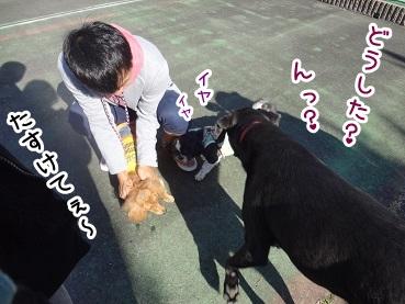 kinako1151.jpg