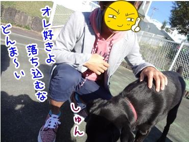 kinako1153.jpg