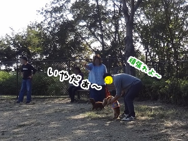 kinako1156.jpg
