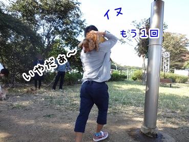 kinako1158.jpg