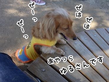 kinako1166.jpg