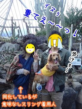 kinako1169.jpg