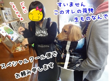 kinako1172.jpg