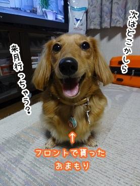 kinako1174.jpg