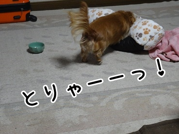 kinako1176.jpg