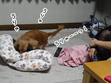 kinako1178.jpg