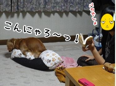 kinako1181.jpg
