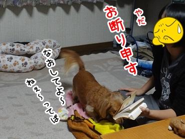 kinako1182.jpg