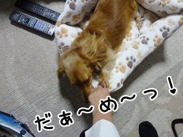 kinako1186.jpg