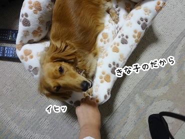 kinako1187.jpg