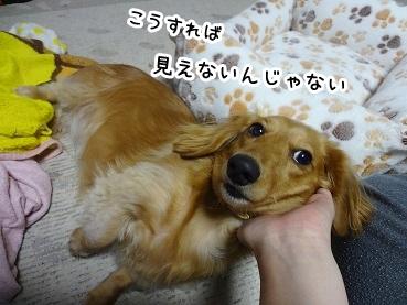 kinako1196.jpg