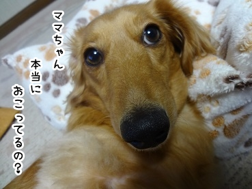 kinako1197.jpg