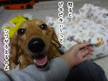 kinako1199.jpg