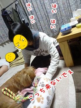 kinako1201.jpg