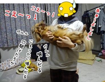 kinako1214.jpg