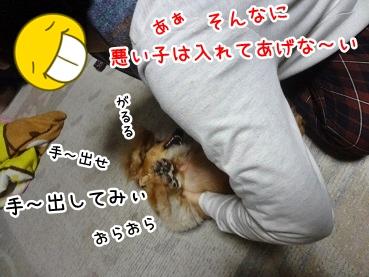 kinako1215.jpg