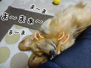 kinako1216.jpg