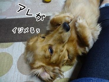 kinako1217.jpg