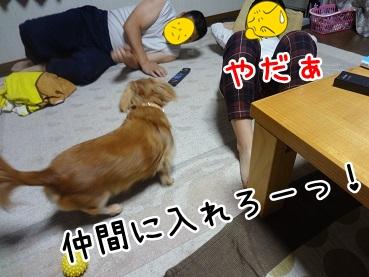 kinako1218.jpg