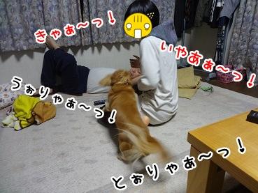 kinako1219.jpg