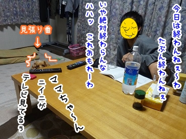 kinako1224.jpg