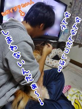 kinako1236.jpg