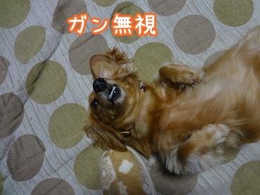 kinako1265.jpg