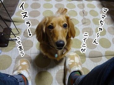 kinako1268.jpg