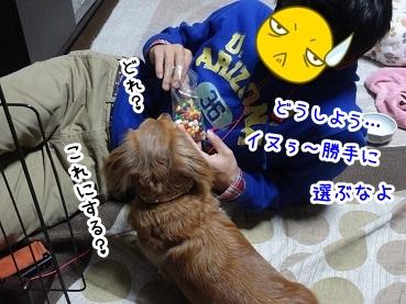 kinako1284.jpg