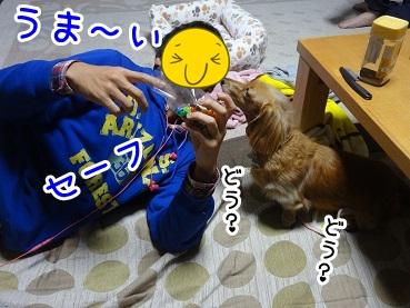 kinako1285.jpg