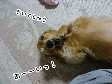 kinako1301.jpg