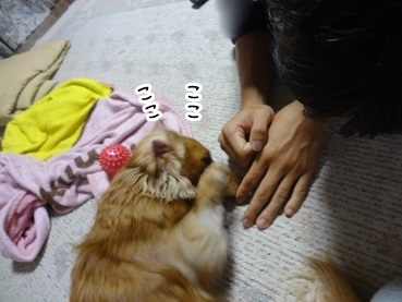 kinako1306.jpg