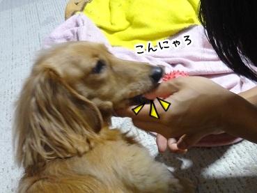 kinako1311.jpg