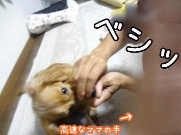 kinako1314.jpg